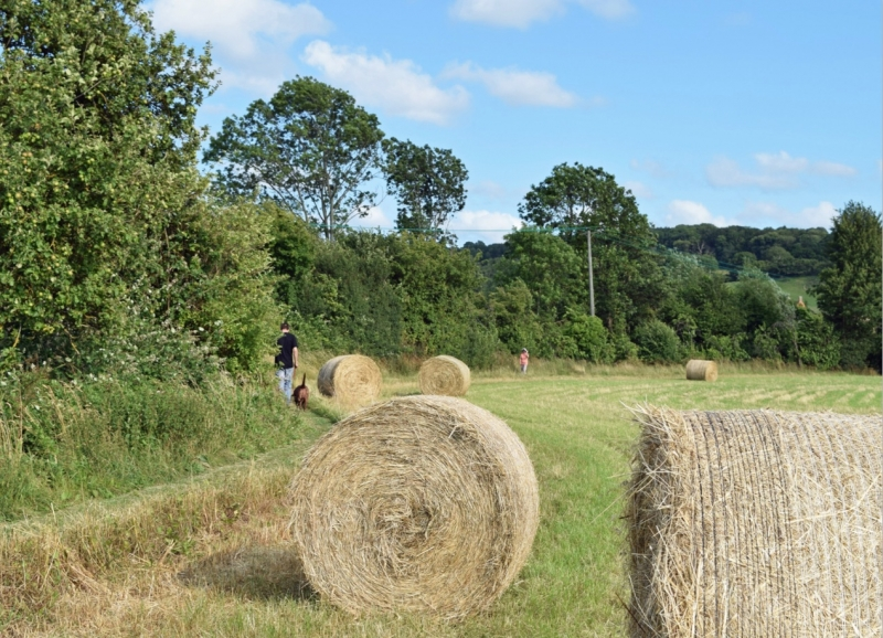 Harvest Walk